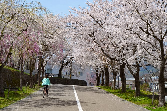 "BTF Rural Japan ""FURUSATO"" Cherry Blossom Cycling Tour photo 2"