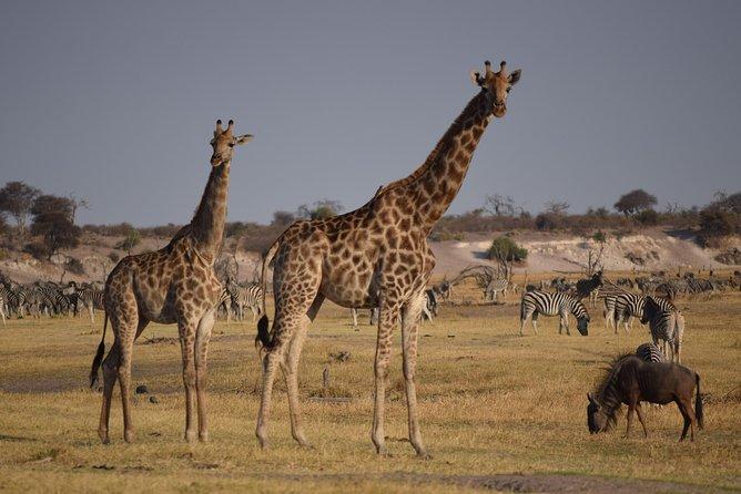 Makgadkgadi pans - Central Kalahari Adventure 7 Nights/ 8 Days