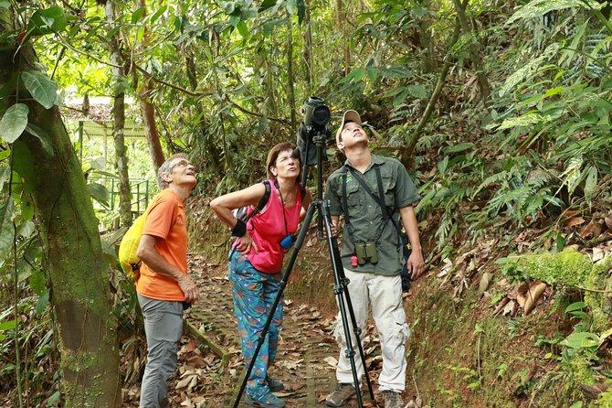 Bird Watching in Tirimbina Biological Reserve, Sarapiquí.