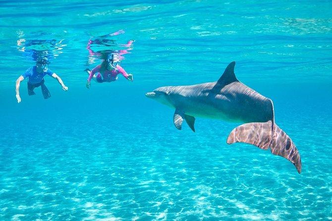 Dolphin House (ROYAL) - VIP Snorkeling Sea Trip - Hurghada