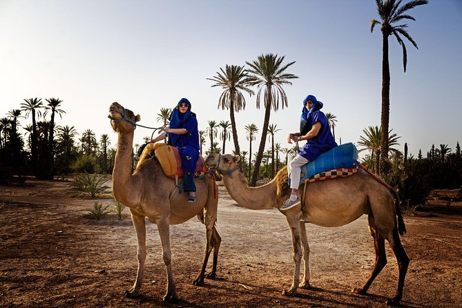 1 Hour Camel Ride in Palm Grove of Marrakech