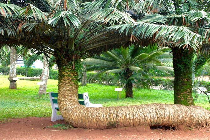 Accra To Aburi Gardens And Tetteh Quarshie Cocoa Farms