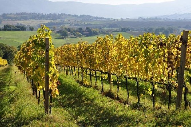 Harvest week and Wine weeks Package - Prices per person in shared Double room