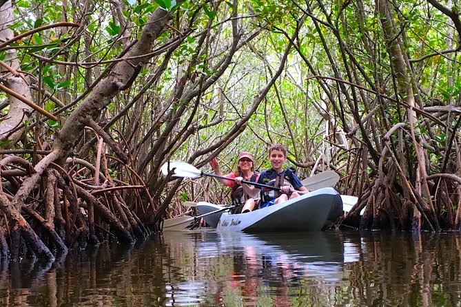 Mangrove Tunnels, Manatee, and Dolphin Sunset kayak tour with Fin Expeditions