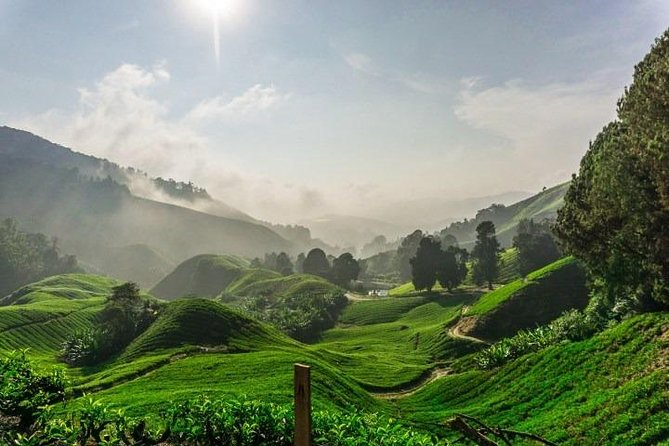 Private Tour : Cameron Highland Day Trip from Kuala Lumpur