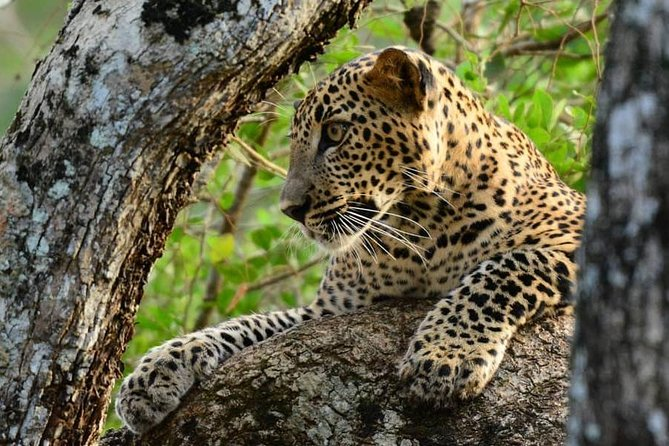 Afternoon Safari in Wilpattu National Park from Negombo