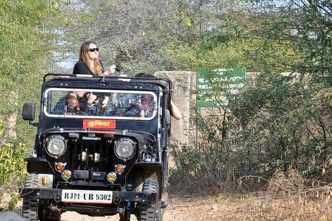 Gyptain Safari Tour in Jaipur