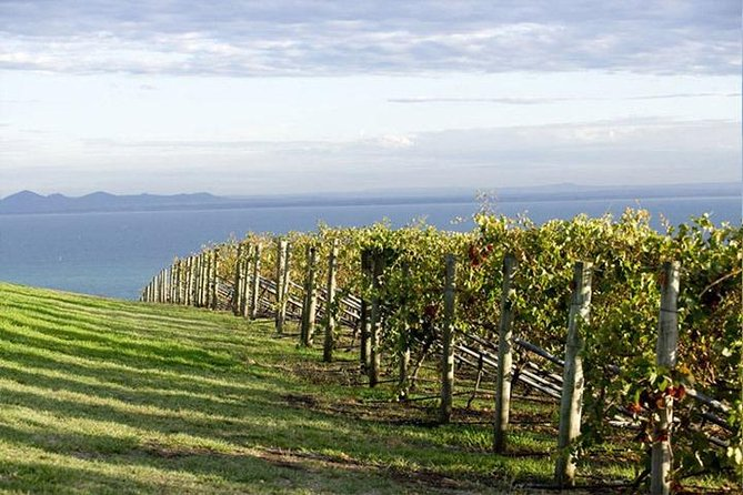 Winery Tours – Mornington/Yarra Valley/Bellarine/Macedon Ranges - Up to 11 Pax