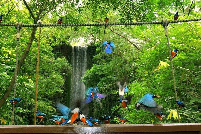 Jurong Bird Park Ticket