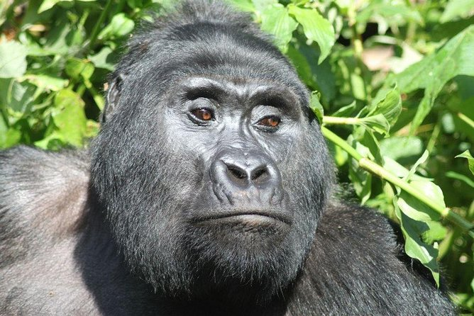 8 Day Uganda - Rwanda Gorillas and Big Game Safari photo 1