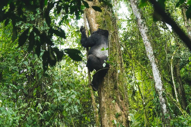 8 Day Uganda - Rwanda Gorillas and Big Game Safari photo 8
