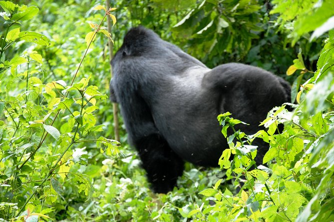 8 Day Uganda - Rwanda Gorillas and Big Game Safari photo 7