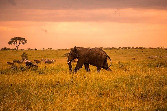 serengeti & ngorongoro 3 days group safari