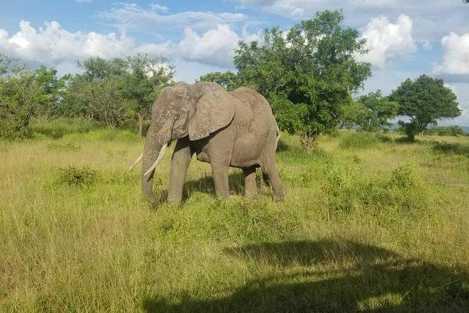 5 Days Big five Lodging Safari in the Northern Tanzania