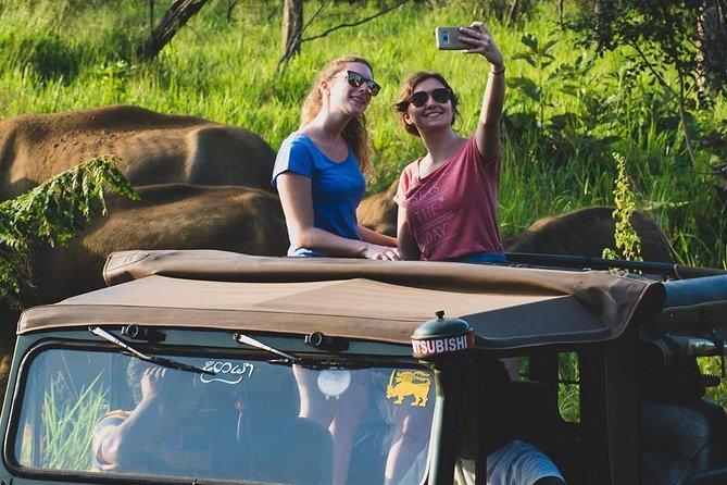 Evening Safari Drive in Kaudulla National Park