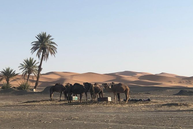 2 Days Zagoura Desert Trip from Marrakech - Camel Trek - Berber Tent