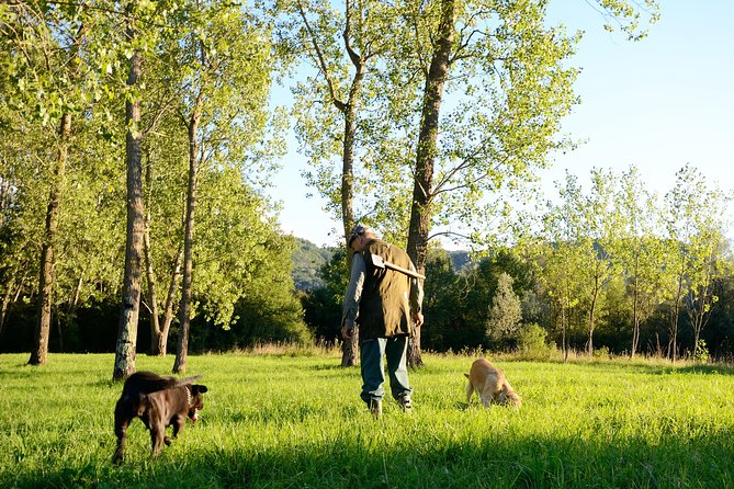 Private truffle hunting in Istria