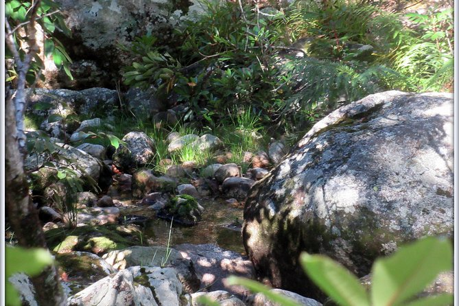 Forest Bathing Cape Town- recharge you soul in an Afromontane Forest photo 1