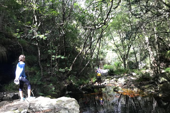 Forest Bathing Cape Town- recharge you soul in an Afromontane Forest photo 6