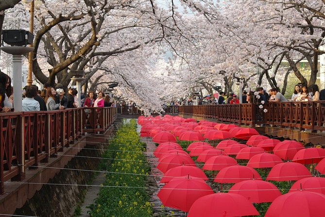 Cherry blossom tour in Busan and Jinhae from Busan