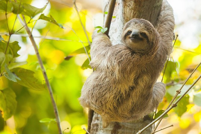 Sloths, Frogs, Monkeys!! with Waterfall Hike and Corobici River Safari Float
