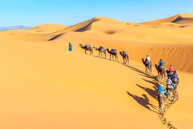 Camel Trekking in Abu Dhabi- Abu Dhabi Camel Ride