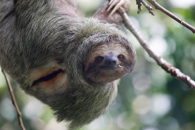 Rain forest, Sloth and animal sanctuary, Chocolate, Private tour.