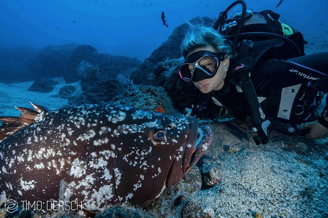 Scuba Dive for certified divers including equipment rental and guide