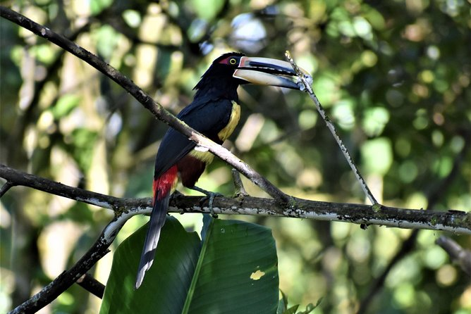 Birdwatching Mindo Tour