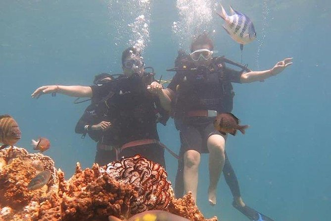 Full-day Explore The Word Under-The-Sea from Nha Trang