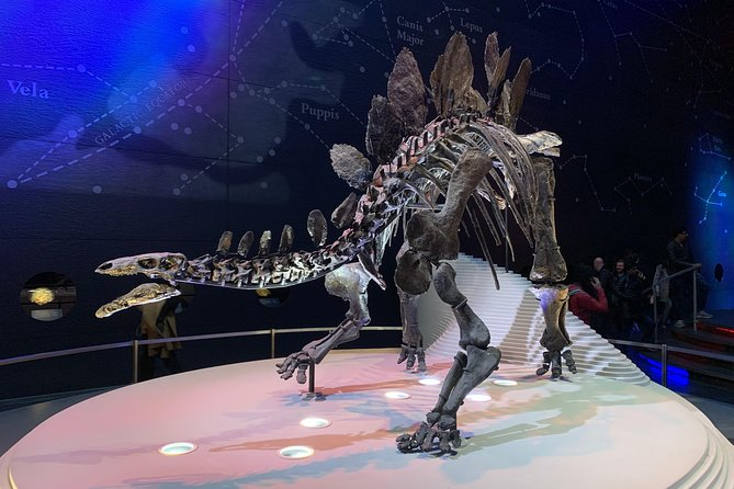 Discover the Dinosaurs at the London Natural History Museum Kid-Friendly Tour