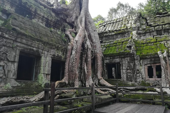 Ta Prohm Temple Tomb Raider Tour