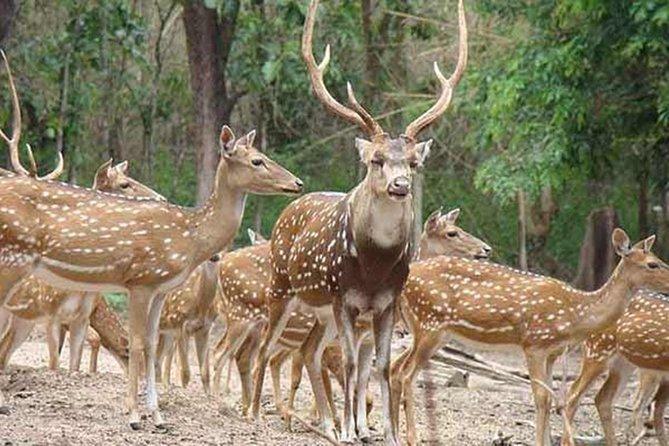 Skip The Line : Nahargarh Biological Park Tour, Jaipur