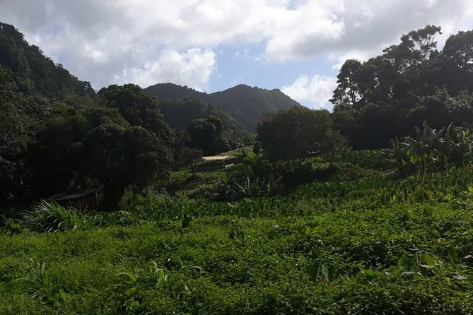 Rain Forest Jungle tour