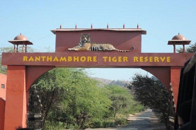 Jeep Safari Experience at Ranthambore National Park from Jaipur