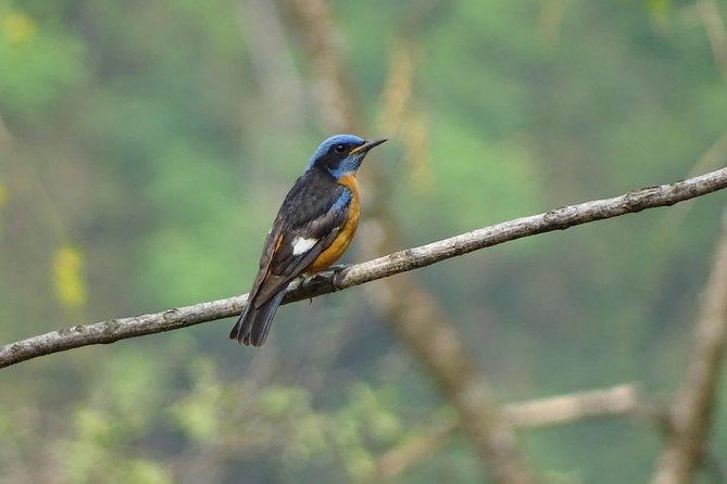 Birding In Neora and Mahananda