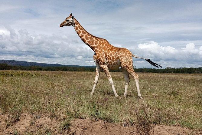 Amboseli National Park Day Tour from Nairobi