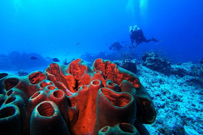 Discover Scuba Diving PADI in Playa del Carmen photo 4