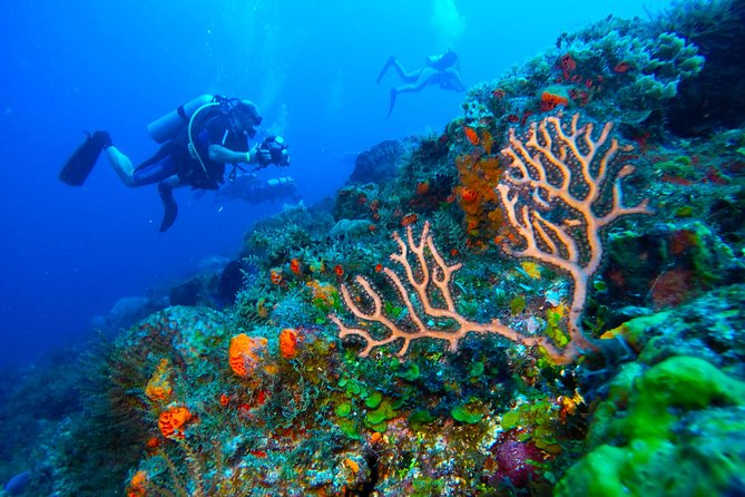 Discover Scuba Diving PADI in Playa del Carmen photo 7