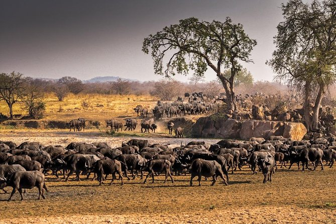 1 Day group tour-Ruaha National park