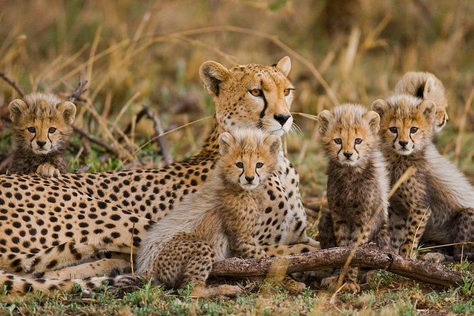 Nairobi National Park - 4Hrs Half Day
