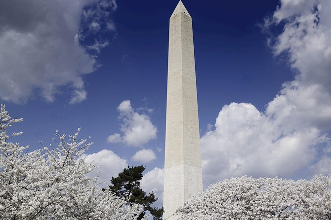 1-Day Washington D.C. Cherry Blossom Tour from Washington D.C. photo 4