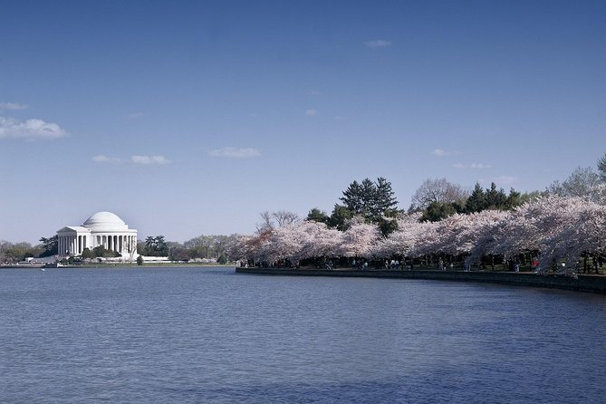 1-Day Washington D.C. Cherry Blossom Tour from Washington D.C. photo 2