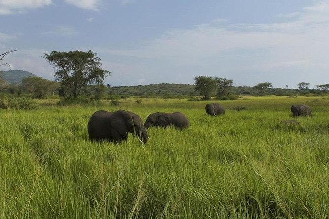 5 Days to Queen Elizabeth national park & Kibale