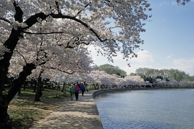 1-Day Washington D.C. Cherry Blossom Tour from Washington D.C. photo 6