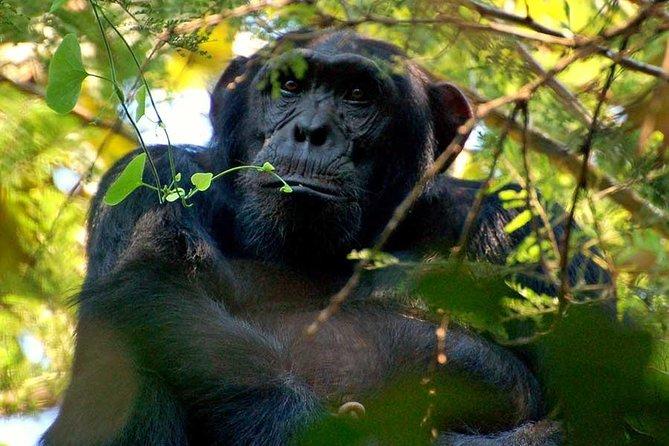 7 Days Ugandan Primates and wildlife safari