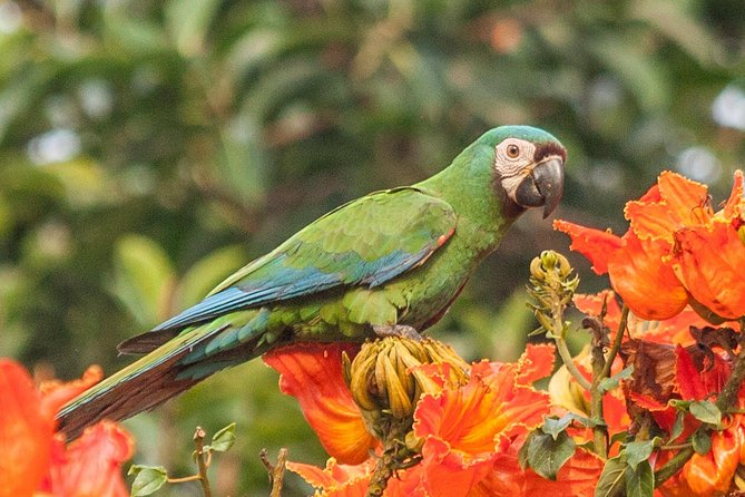 Bird watching neighborhood San Antonio Cali