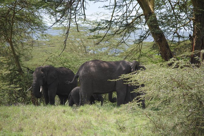 3 days safari in North- Ngorongoro, Tarangire, Mt. Oldeani