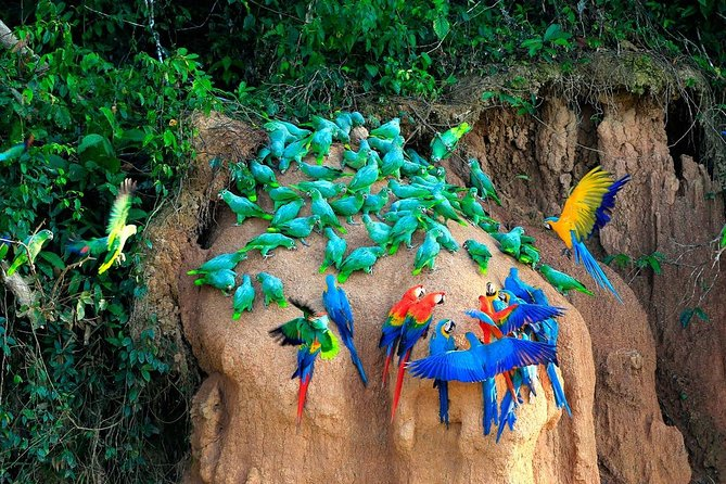 Tambopata Tours + Macaw Clay Lick 3days