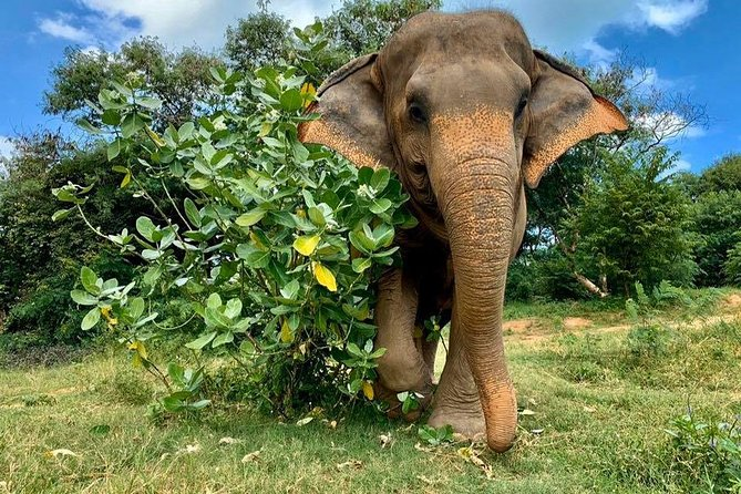 Koh Samui: Half-Day Etihcal Elephant Observation Tour